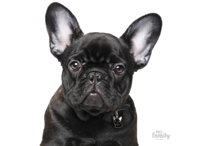 Chapa para perro Friends Bulldog Francés Negro My family