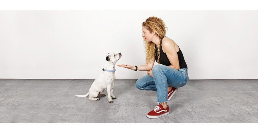 Juegos de olfato para perros en Mascoboutique
