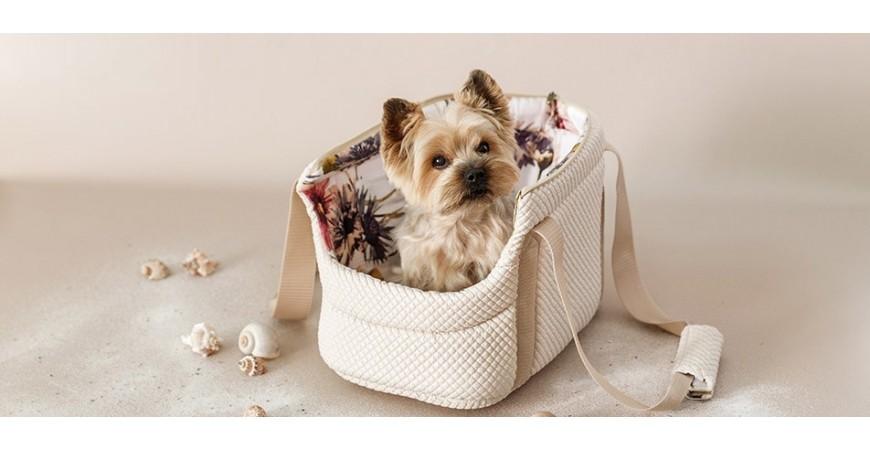 Viajar con tu perro, los mejores consejos en Mascoboutique