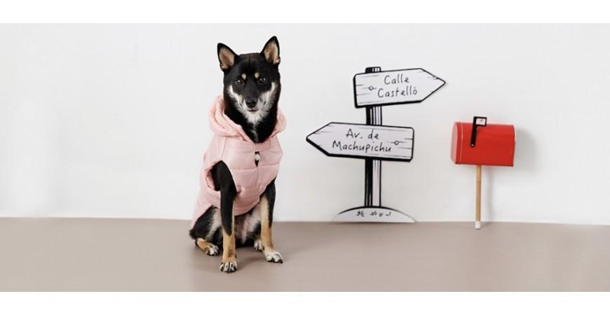 ¿Por qué es recomendable (o no) vestir a los perros?