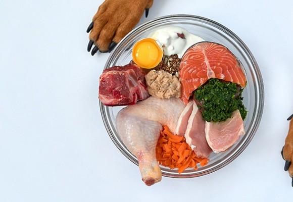 Alimentación canina: ¡Todas las claves! Parte II