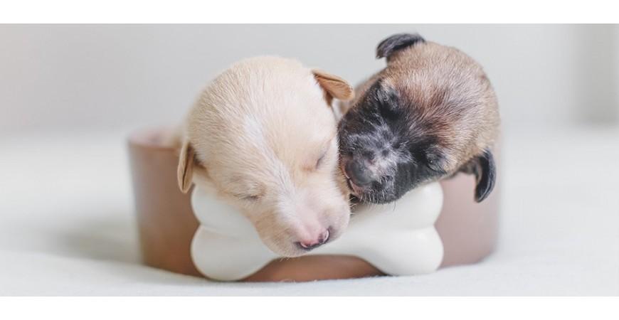 ¡Ampliamos la familia! 5 consejos para educar a tu cachorro de 10
