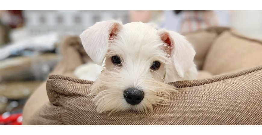 Guardería canina para cachorros ¡Sí, sí, sí!