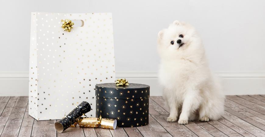 4 tipos de regalo para tu cachorro