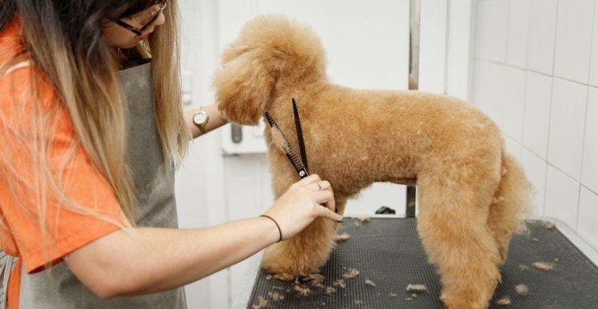Cinco falsos mitos de la peluquería canina