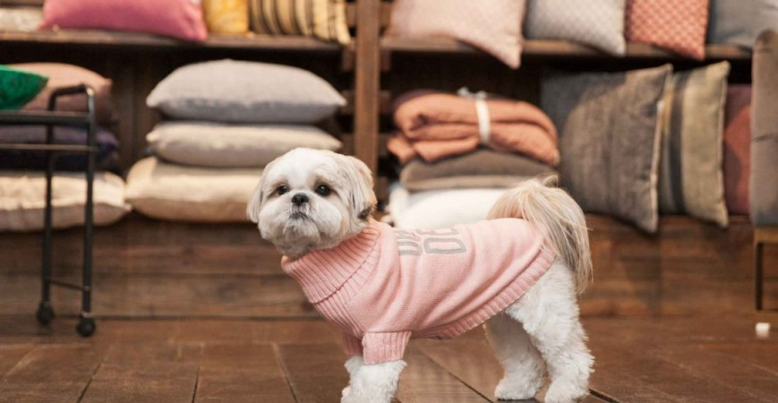 Milk and Pepper, accesorios para perros con estilo